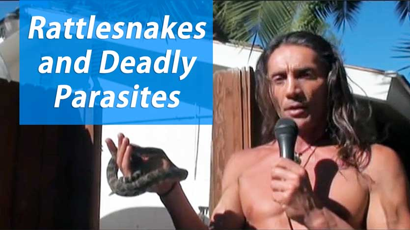 Rattlesnakes and Deadly Parasites