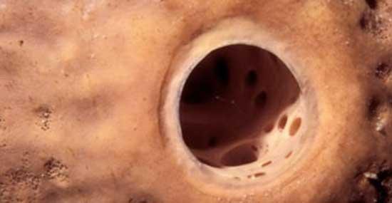 Skin Pore Close Up