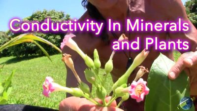 Conductivity In Minerals and Plants