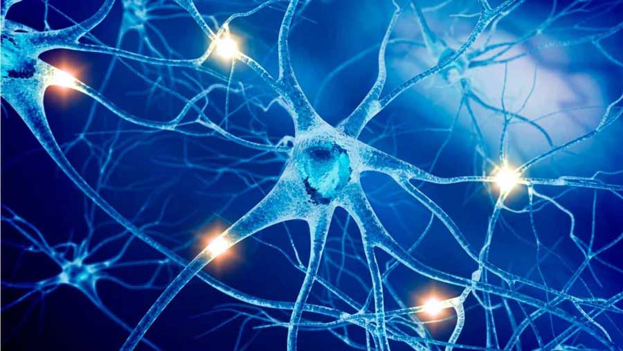 Nerve Cells Transmitting Bio-Electricity
