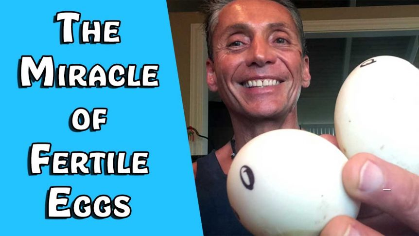The Miracle of Fertile Eggs