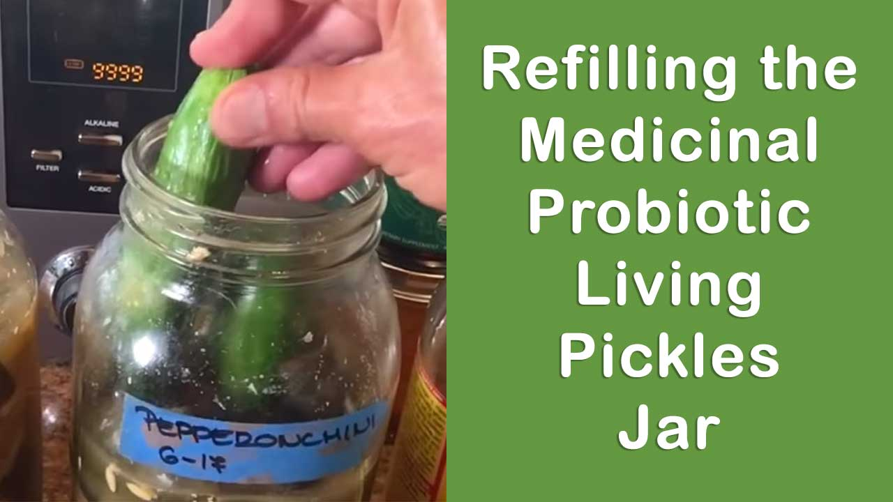 Refilling the Medicinal Probiotic Living Pickles Jar