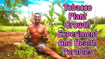Tobacco Plant Growth Experiment And Health Parables