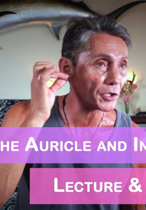 Optimizing the Auricle and Inner Ear