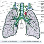 Lymphatic System Information