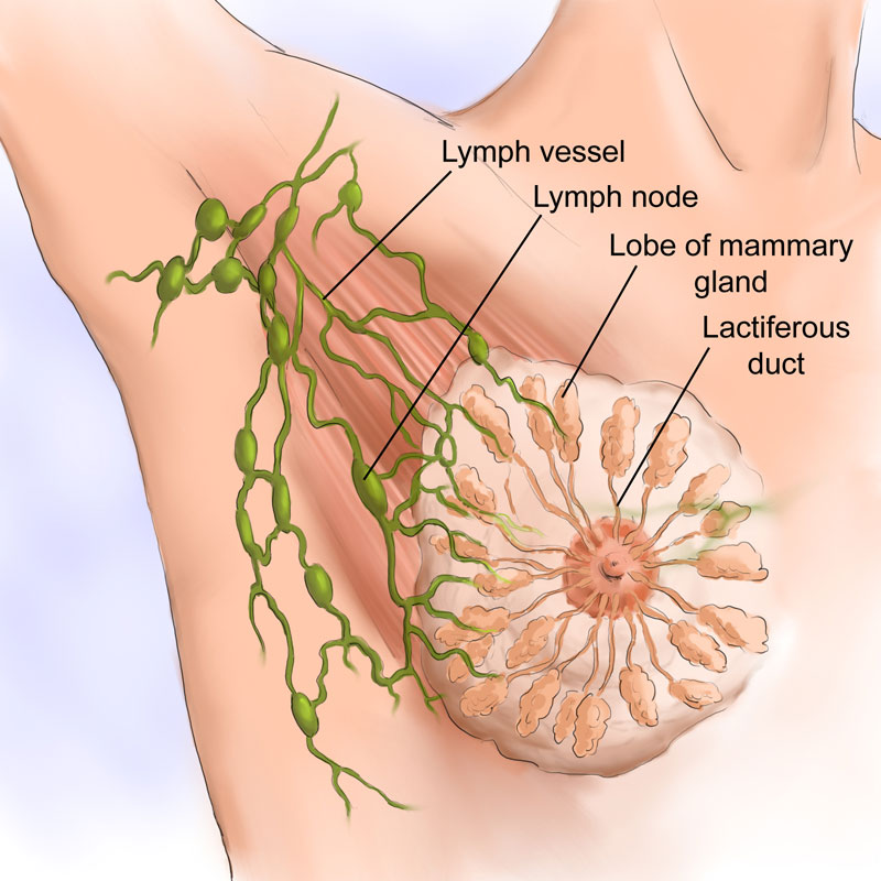 Lymphatic Breast Diagram
