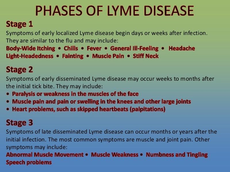 Phases of Lyme Disease