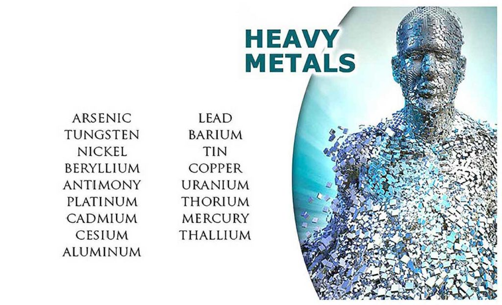 Heavy Metals In The Human Body