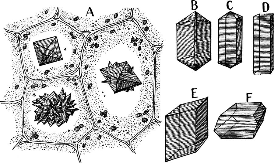 Different forms of calcium oxalate crystals,