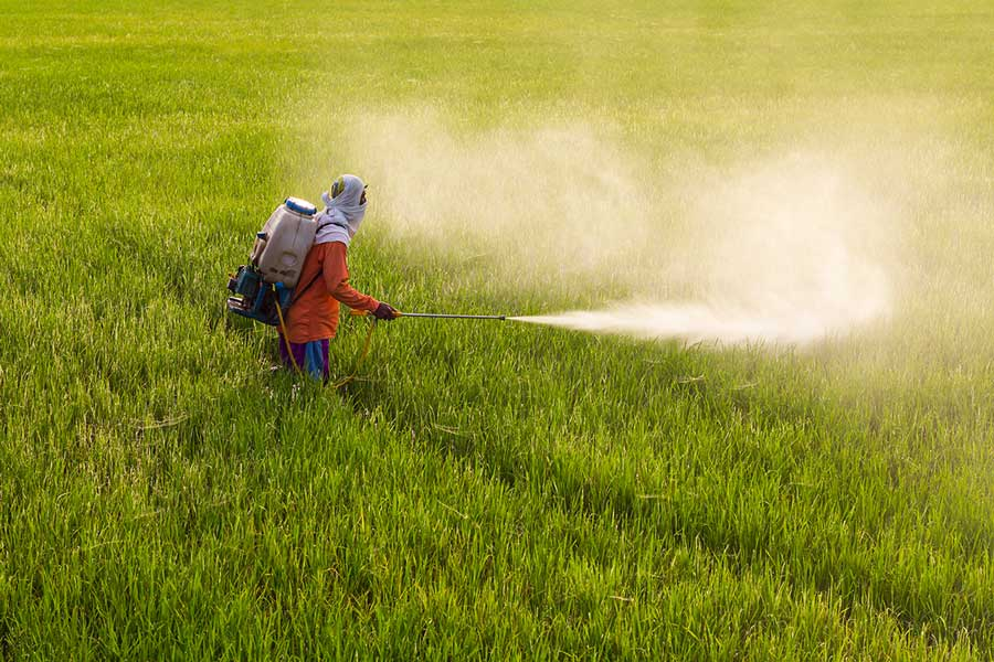 Thailand Man farmer to spray herbicides or chemical fertilizers on the fields green rice growing