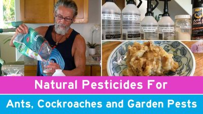 Natural Pesticides For Ants, Cockroaches and Garden Pests