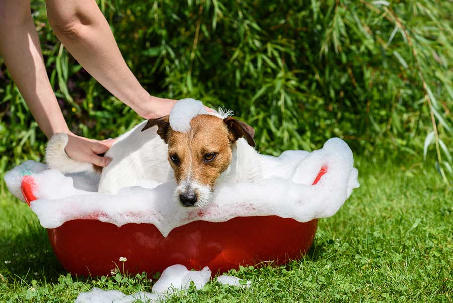 Dog takes a bath at hot summer day