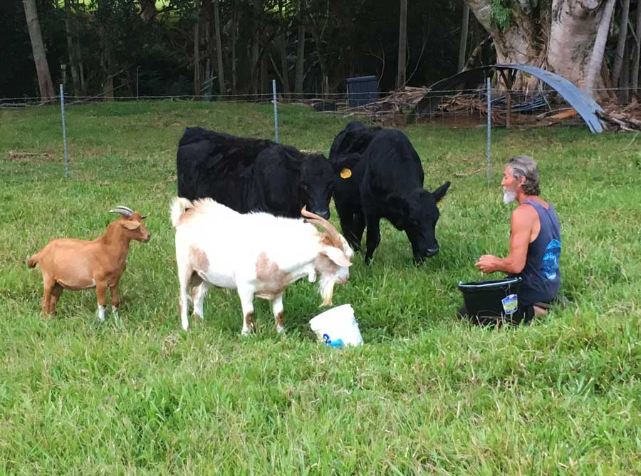 Robert Cassar Feeding Cows and Goats