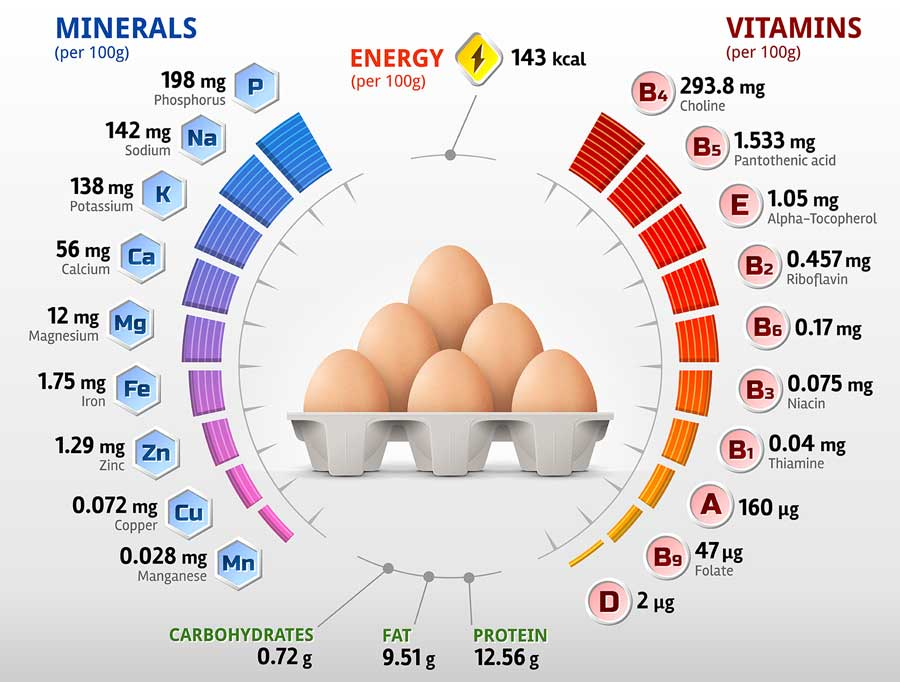 Infographics about nutrition facts in raw egg