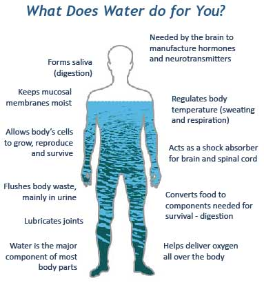 What Does Water Do For You